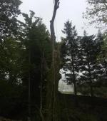 Monster leaning Ash rig